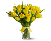 Evergreen Floral, Inc., Paramus, New Jersey - Spring Tulips Deluxe - Yellow, picture