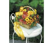 Accent Flowers in Pinellas Park, Florida, Hayes Florist