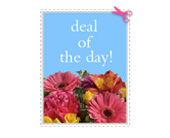 New York Flowers - Deal of the Day - Rose Red & Lavender