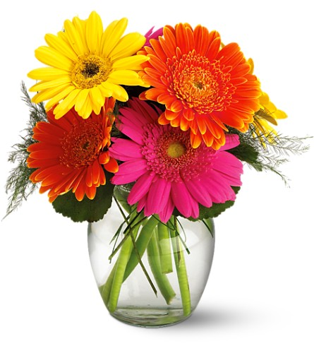 Teleflora's Fiesta Gerbera Vase in New Glasgow NS, McKean's Flowers Ltd.