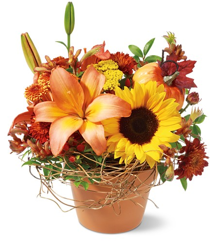 Pumpkin Patch Local and Nationwide Guaranteed Delivery - GoFlorist.com