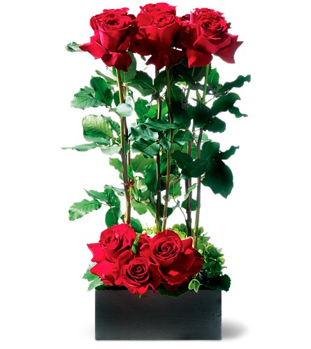 Scarlet Splendor Roses in Wilmington MA, Designs By Don Inc