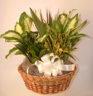 12'' Dishgarden in Salisbury MD, Kitty's Flowers