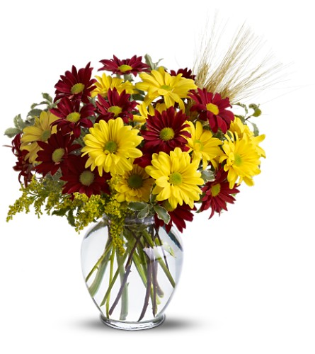 Fall for Daisies in Metairie LA, Villere's Florist