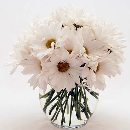White Daisies Local and Nationwide Guaranteed Delivery - GoFlorist.com