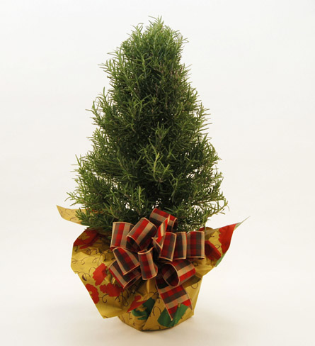 6'' Christmas Tree Local and Nationwide Guaranteed Delivery - GoFlorist.com