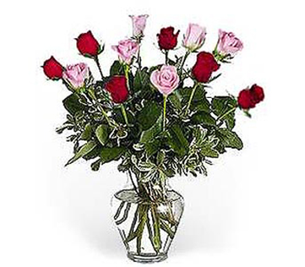 12 Pink and Red Roses in usa-send-flowers NJ, Stanley's USAsend Flowers & Gifts