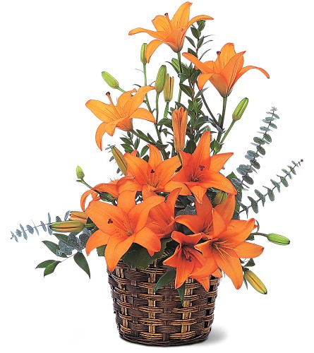 Asiatic Lilies in Denton TX, Crickette's Flowers & Gifts