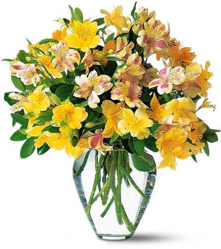 Sparkling Alstroemeria in Oklahoma City OK, Array of Flowers & Gifts
