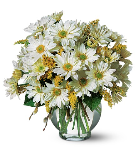 Daisy Cheer in Nationwide NH, A Flower Pale