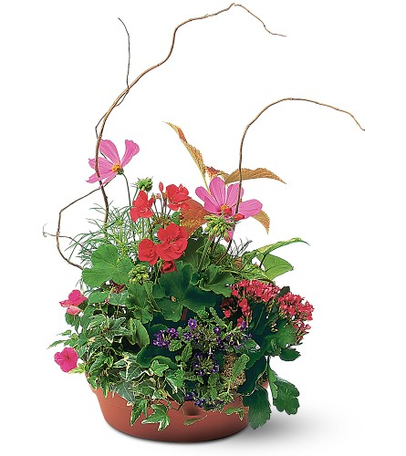 Summer Garden Planter in Rochester NY, Fabulous Flowers and Gifts