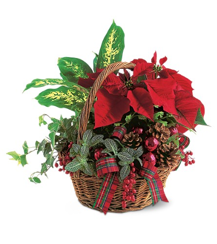 Holiday Planter Basket in usa-send-flowers NJ, Stanley's America's Florist & Gifts