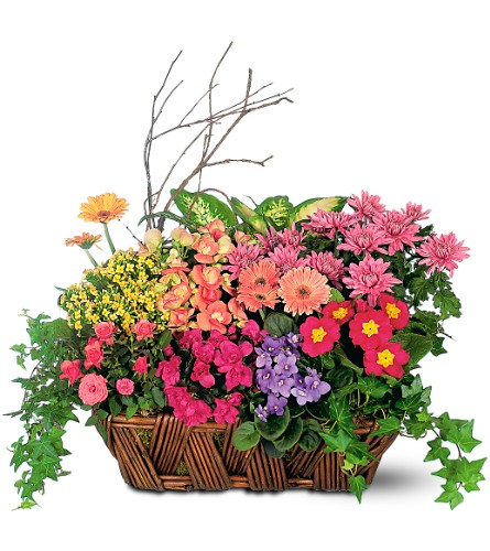 Deluxe European Garden Basket in Washington DC, Palace Florists
