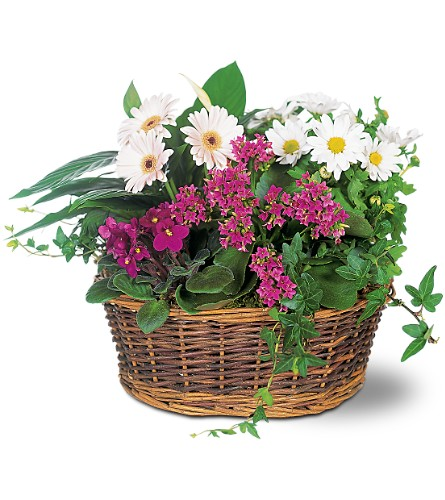 Traditional European Garden Basket in Arlington Heights IL, Sylvia's - Amlings Flowers