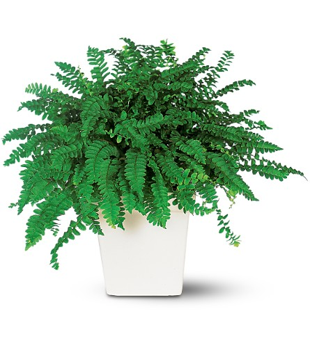 Decorative Fern in Laurel MD, Rainbow Florist & Delectables, Inc.
