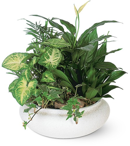 Medium Dish Garden Local and Nationwide Guaranteed Delivery - GoFlorist.com