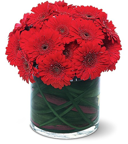 Red Gerbera Collection in Augusta ME, Augusta Florist