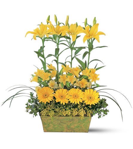 Yellow Garden Rows in New York NY, Flowers By K & R Florist, Inc.