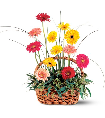 Uplifting Gerbera Basket in San Francisco CA, Fillmore Florist