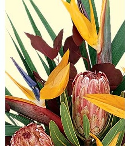Designer's Choice Exotic Arrangement in Burlington NJ, Stein Your Florist
