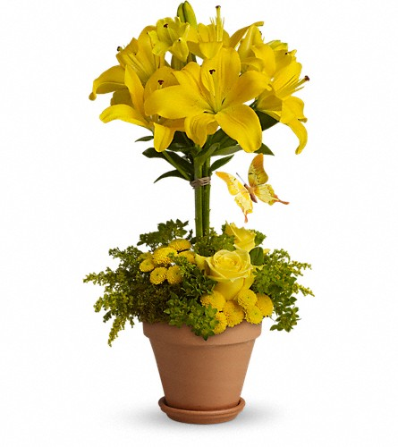 Yellow Fellow in Chicago IL, Chicago Flower Company