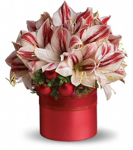 Teleflora's Peppermint Amaryllis in Batesville MS, The Flower Company