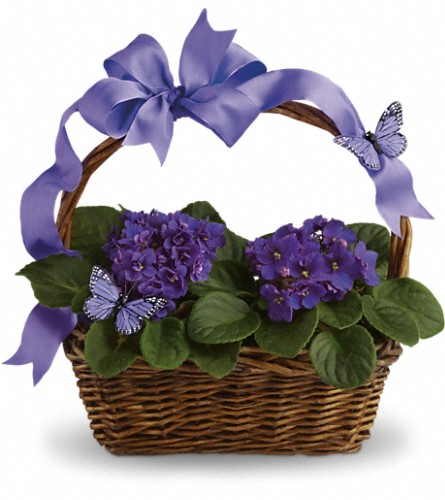 Violets And Butterflies in Sayville NY, Sayville Flowers Inc