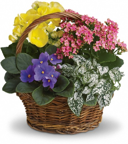 Spring Has Sprung Mixed Basket in Menomonee Falls WI, Bank of Flowers
