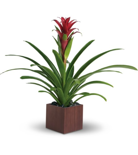 Teleflora's Bromeliad Beauty in Zeeland MI, Don's Flowers & Gifts