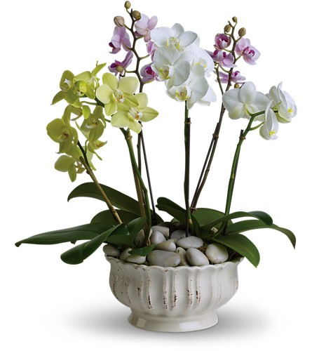 Regal Orchids Local and Nationwide Guaranteed Delivery - GoFlorist.com