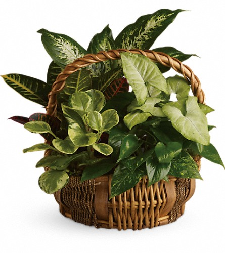 Emerald Garden Basket in Fairfax VA, Rose Florist