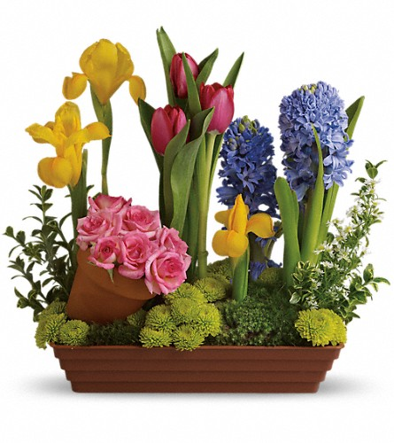 Spring Favorites in Chicago IL, Hyde Park Florist
