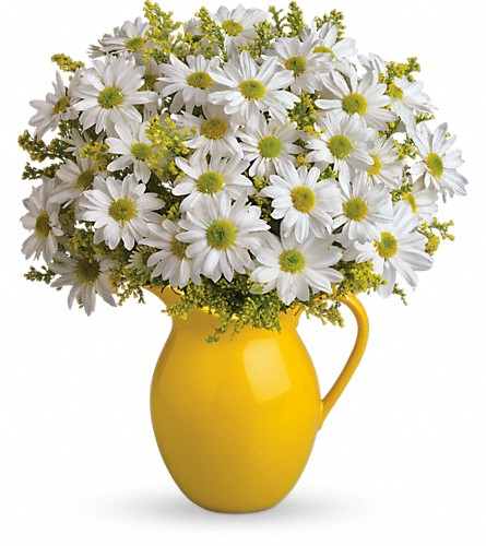 Teleflora's Sunny Day Pitcher of Daisies in San Francisco CA, Rose & Leona's Flower Shop