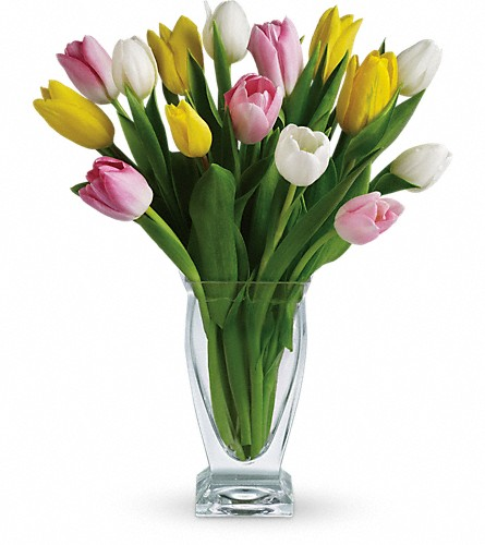 Teleflora's Tulip Treasure in Baltimore MD, Raimondi's Flowers & Fruit Baskets