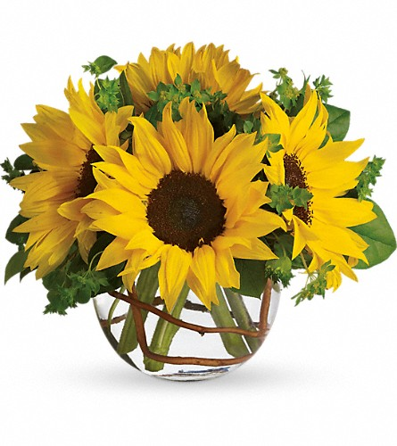 Sunny Sunflowers in flower shops MD, Flowers on Base