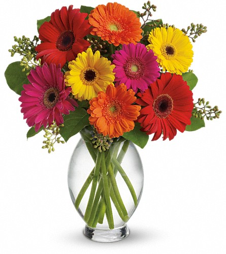 Teleflora's Gerbera Brights in Washington DC, Palace Florists