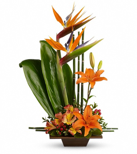 Teleflora's Exotic Grace in Baltimore MD, Raimondi's Flowers & Fruit Baskets