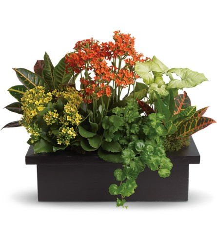 Stylish Plant Assortment in Oakland MD, Green Acres Flower Basket
