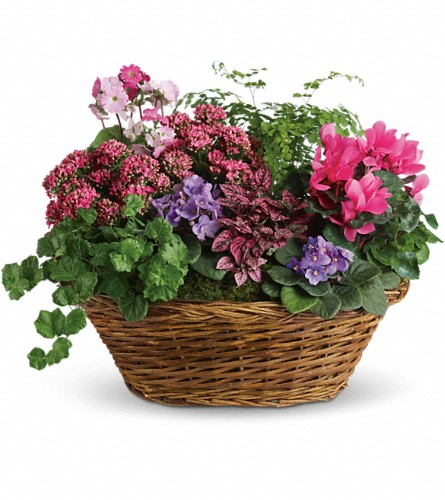 Simply Chic Mixed Plant Basket in Tuckahoe NJ, Enchanting Florist & Gift Shop