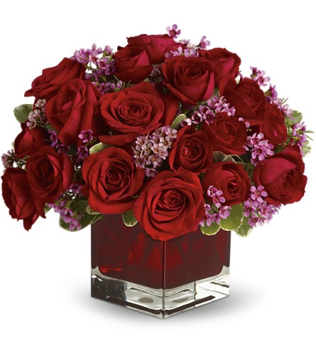 Never Let Go by Teleflora - 18 Red Roses in Royersford PA, Three Peas In A Pod Florist