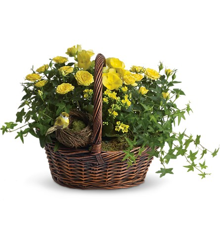 Yellow Trio Basket in Salem MA, Flowers by Darlene/North Shore Fruit Baskets