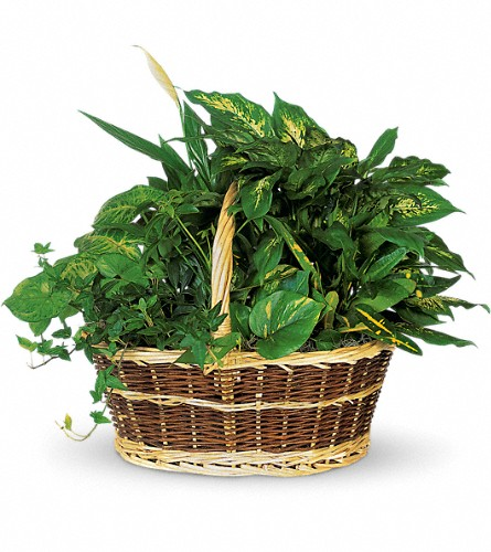 Large Basket Garden in Boynton Beach FL, Boynton Villager Florist