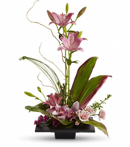 Imagination Blooms with Cymbidium Orchids in Rochester NY, Red Rose Florist & Gift Shop