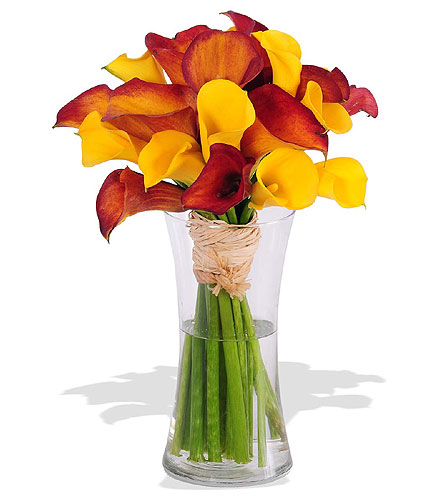 Mango Calla Lily Bouquet in St. Louis MO, Walter Knoll Florist