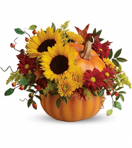 Teleflora's Pretty Pumpkin Bouquet in Bloomington IL, Forget Me Not Flowers