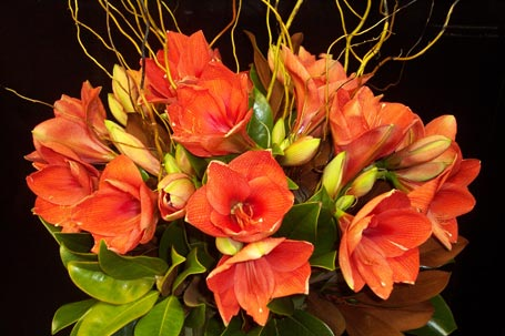 Amaryllis & Willow Composition in New York NY, Fellan Florists Floral Galleria