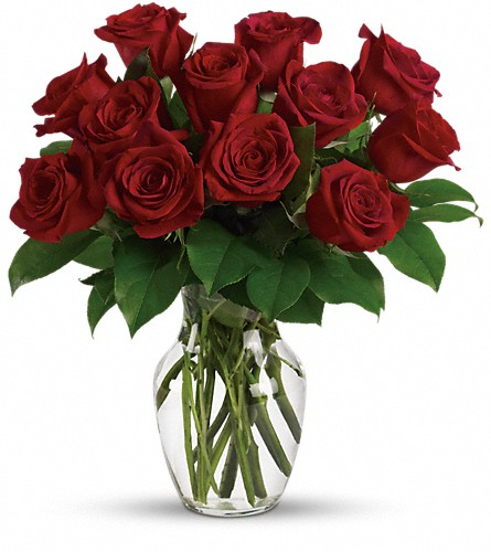Enduring Passion - 12 Red Roses in Canton NC, Polly's Florist & Gifts