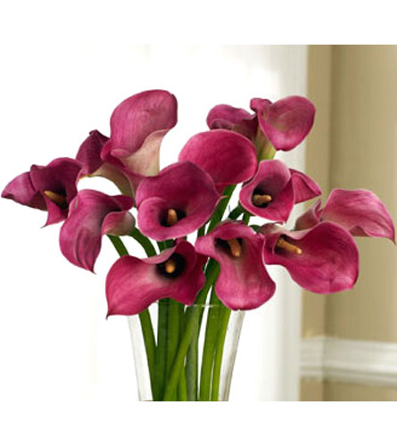 Pink Mini Callas in Norristown PA, Plaza Flowers