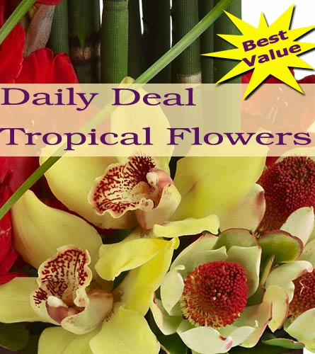 Tropical Arrangement Daily Deal in Norristown PA, Plaza Flowers