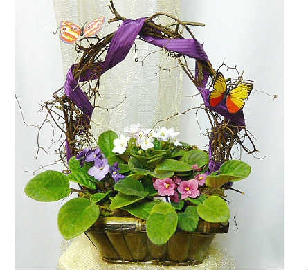 Violets and Butterflies in Warren MI, Downing's Flowers & Gifts Inc.